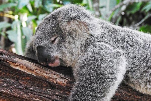 Discover the natural world of Australia on our Eco tour - Nurtured Tours