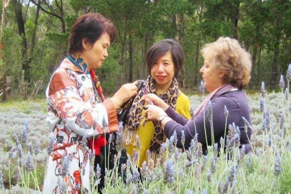 Lavender Farm Eco Tour 2014 - Nurtured Tours (4)